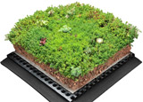 Add a green roof